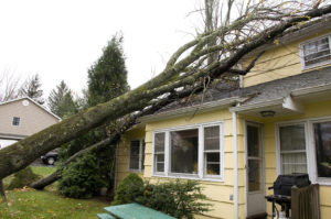 Emergency Tree Removal Services in Sanford - Call 407-531-8068 24/7