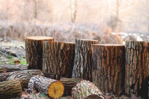 Sanford Tree Services and Stump Grinding